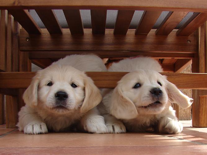 Cachorros lm 1