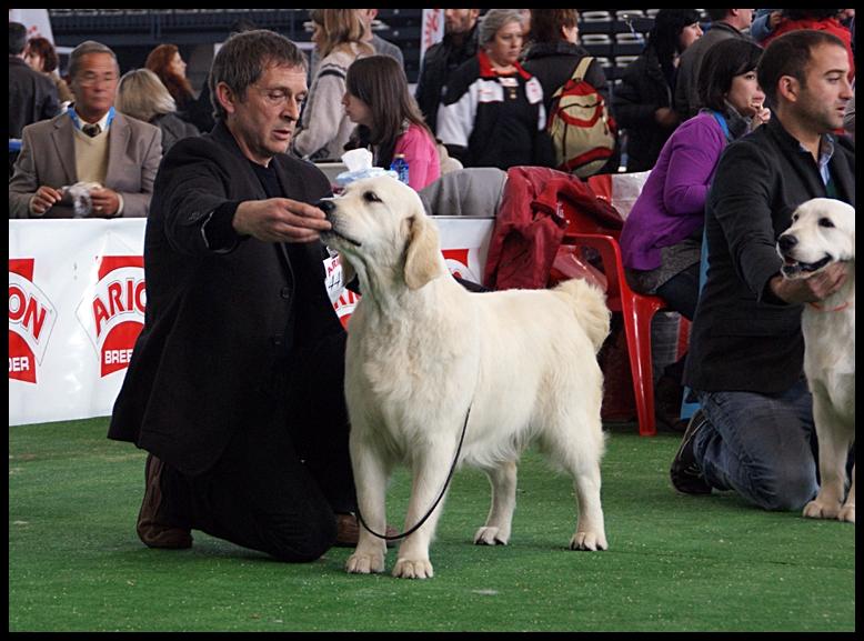 Exp. Internacional Especial Retrievers Vigo 2011