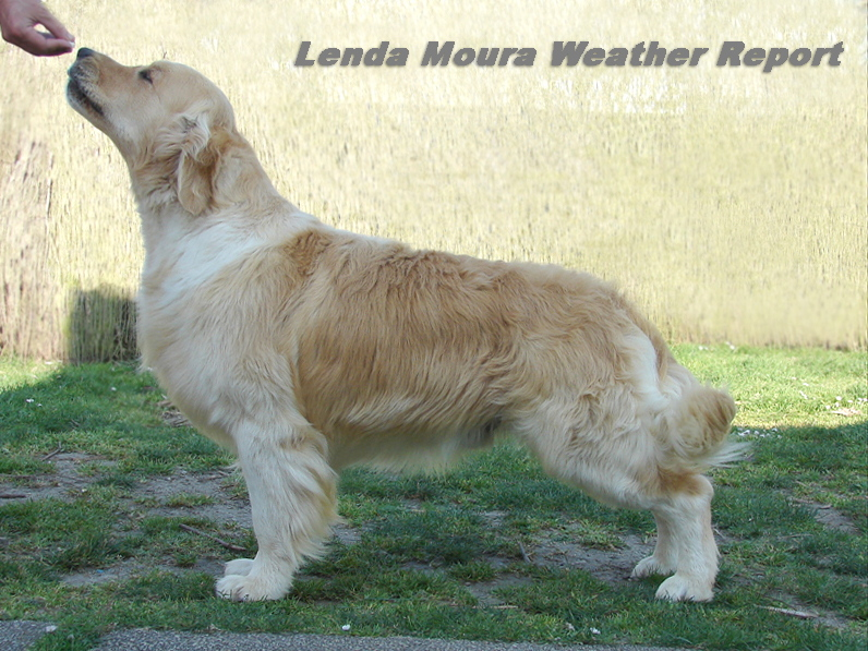 "Lenda Moura Weather Report   ""Jaco"""